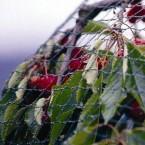 Tinklas augalams apsaugoti 6*5 m 30g/m2 su 6 kaiščiais GARDEN LINE